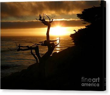 Ghost Tree At Sunset Canvas Print by Bev Conover