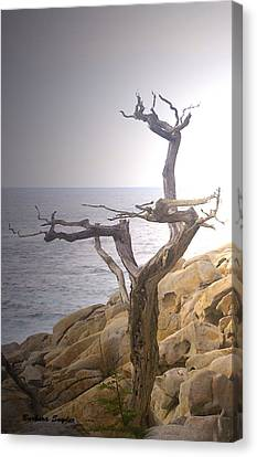 Ghost Tree Detail Canvas Print by Barbara Snyder