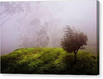 Ghost Tree In The Haunted Forest. Nuwara Eliya. Sri Lanka Canvas Print by Jenny Rainbow