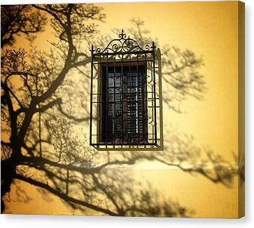 Ghost Tree Canvas Print by Mary Ann Southern