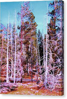Ghost Trees Of The Yellowstone Canvas Print