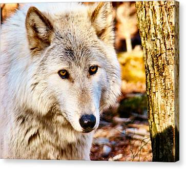 Ghost Wolf Canvas Print by Art Dingo