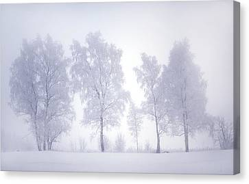 Ghostly Trees In Winter Mist Canvas Print by Jenny Rainbow