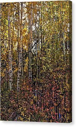 Ghosts Of A Quaking Aspen Canvas Print