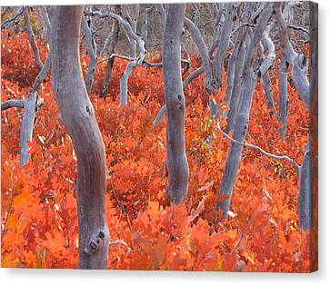 Ghosts Of Seasons Past Canvas Print by Feva  Fotos
