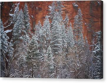 Ghosts Of Winter Canvas Print by Peter Coskun