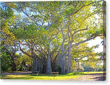 Giant Banyan Tree Canvas Print by Iryna Goodall