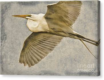 Giant Beauty In Flight Canvas Print by Deborah Benoit