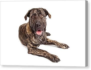 Giant Breed Puppy Dog Canvas Print by Susan Schmitz