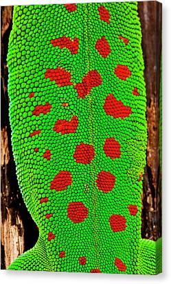 Giant Day Gecko, Phelsuma Canvas Print by David Northcott