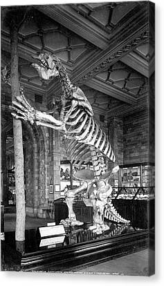 Giant Ground Sloth Canvas Print