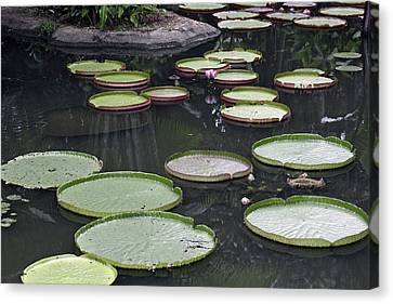Canvas Print featuring the photograph Giant Lily Pads by Shoal Hollingsworth