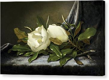 Giant Magnolias Canvas Print by Martin Johnson Heade