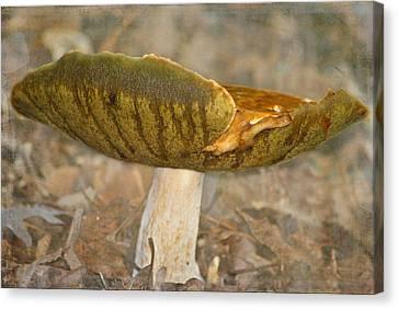 Giant Mushroom Canvas Print by Linda Segerson
