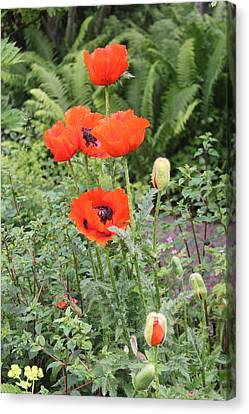 Canvas Print featuring the photograph Giant Poppies by David Grant