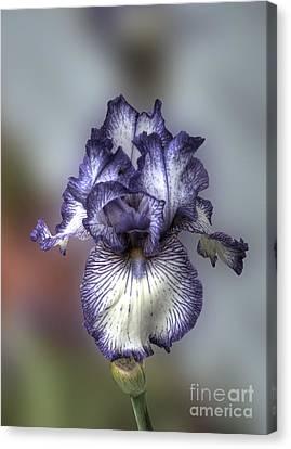 Giant Purple Iris Canvas Print by Deborah Smolinske