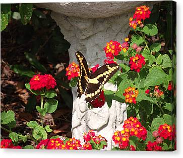 Canvas Print featuring the photograph Giant Swallowtail On Lantana by Jayne Wilson