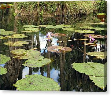 Giant Water Lilies Canvas Print by Zina Stromberg