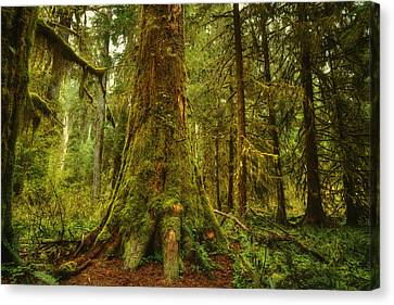Giants Foot Canvas Print by Stuart Deacon
