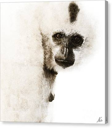 Canvas Print featuring the digital art Crested Gibbon #1 by Nola Lee Kelsey