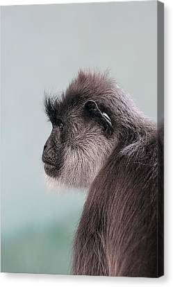 Canvas Print featuring the photograph Gibbon Monkey Profile Portrait by Tracie Kaska