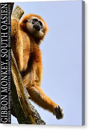 Thailand Canvas Print - Gibbon Monkey  by Tommytechno Sweden