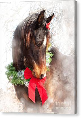 Gift Horse Canvas Print by Sari ONeal