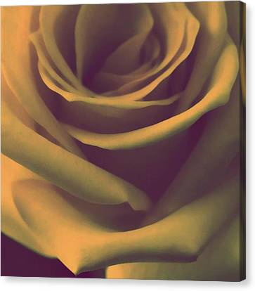 Gift Of Gold Canvas Print
