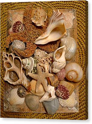 Gifts From The Sea Canvas Print