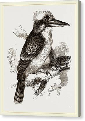 Gigantic Kingfisher Canvas Print by Litz Collection