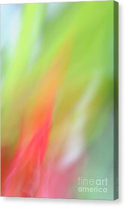 Ginger Flower Abstract 2 Canvas Print