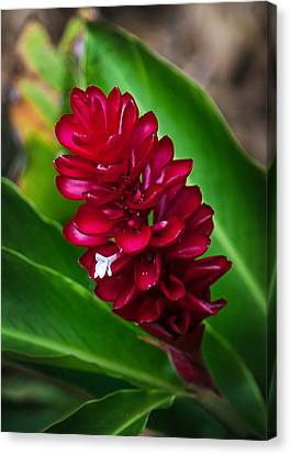 Ginger Flower Canvas Print