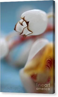 Ginger Flower Canvas Print by AR Annahita