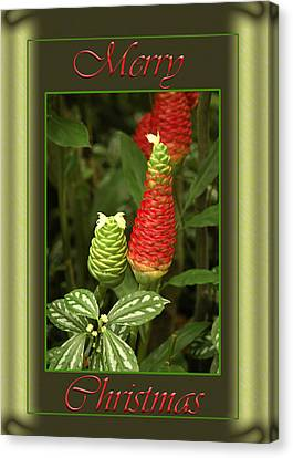 Ginger Lily Pine Cone Christmas Canvas Print by Carolyn Marshall