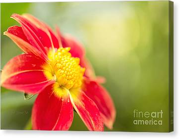Ginger Canvas Print by Beve Brown-Clark Photography
