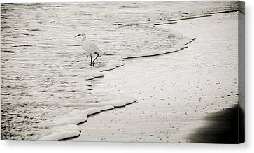 Canvas Print featuring the photograph Gingerly by Kevin Bergen