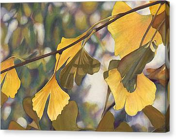 Ginkgo Gold Canvas Print by Sandy  Haight