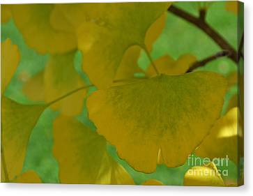 Ginkgo Leaves Abstract Canvas Print