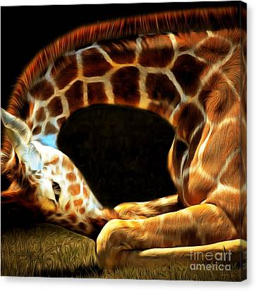 Giraffe 20150211brun Square Canvas Print