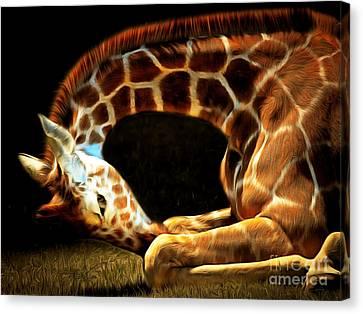 Giraffe 20150211brun Canvas Print