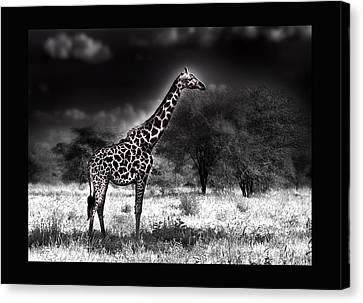 Giraffe Canvas Print by Christine Sponchia