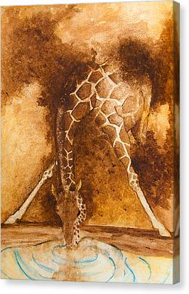 Giraffe Drinking Canvas Print by Kim Lagerhem