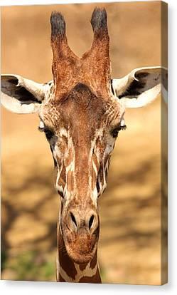 Canvas Print featuring the photograph Giraffe by Elizabeth Budd