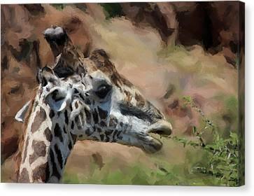 Giraffe Feeding Canvas Print by Daniel Hagerman