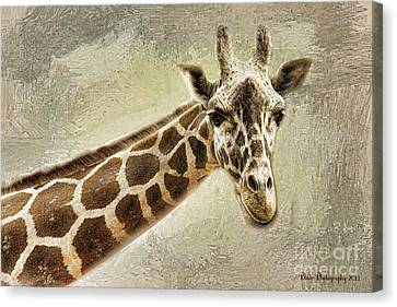 Canvas Print featuring the photograph Giraffe by Linda Blair