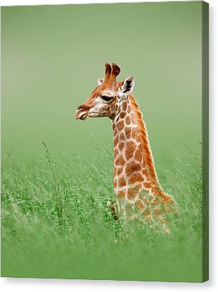 Giraffe Lying In Grass Canvas Print by Johan Swanepoel