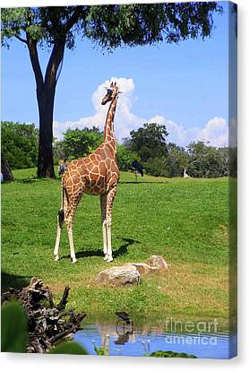 Canvas Print featuring the photograph Giraffe On A Spring Day by Jeanne Forsythe