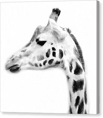 Giraffe On White Background Canvas Print