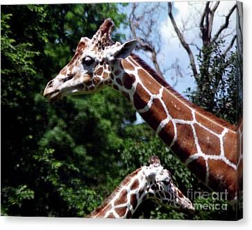 Canvas Print featuring the photograph Giraffes Coming And Going by Tom Brickhouse