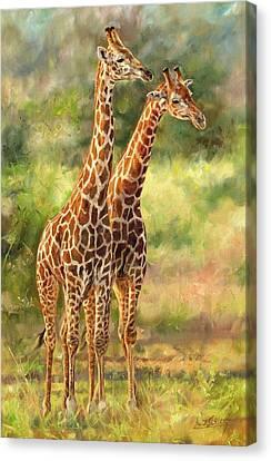 Giraffes Canvas Print by David Stribbling